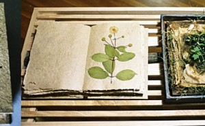 an environmental artwork by Reiko Goto about growing seeds out of handmade paper
