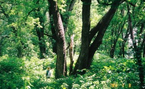 Reiko Goto, researching riverbank botany in Pittsburgh PA. 3 Rivers 2nd Nature Project, circa 2004.