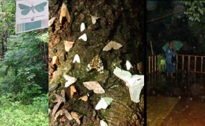 Breath Between Shadow and Light, an artwork by Tim Collins and Reiko Goto about moths in Korea